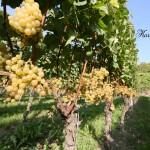 Chardonnay-2007-2400x1600