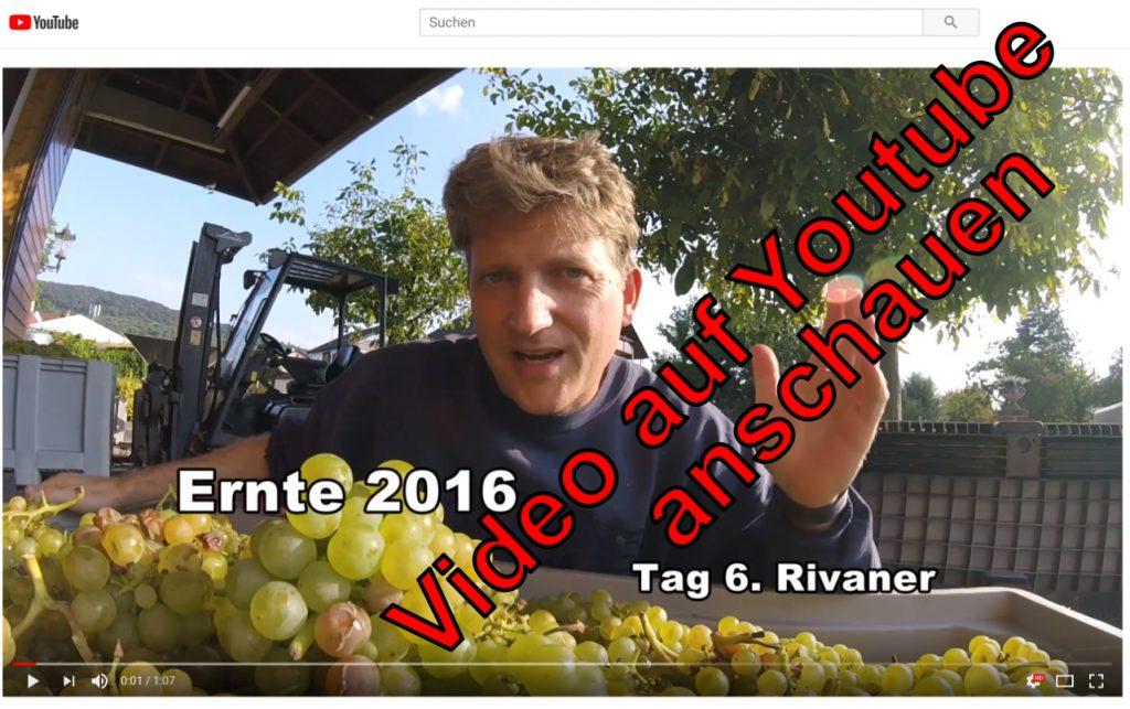 Yt 2016 Tag 6 Rivaner